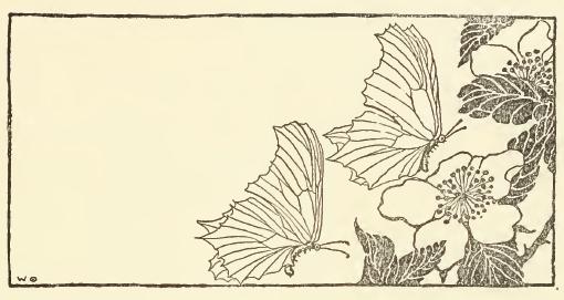 butterfly-06